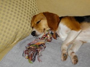 """I refuse to give up all worldly possessions. I am a beagle, not a monk."""